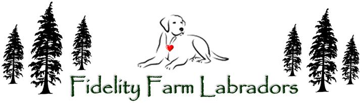 Fidelity Farm Labradors